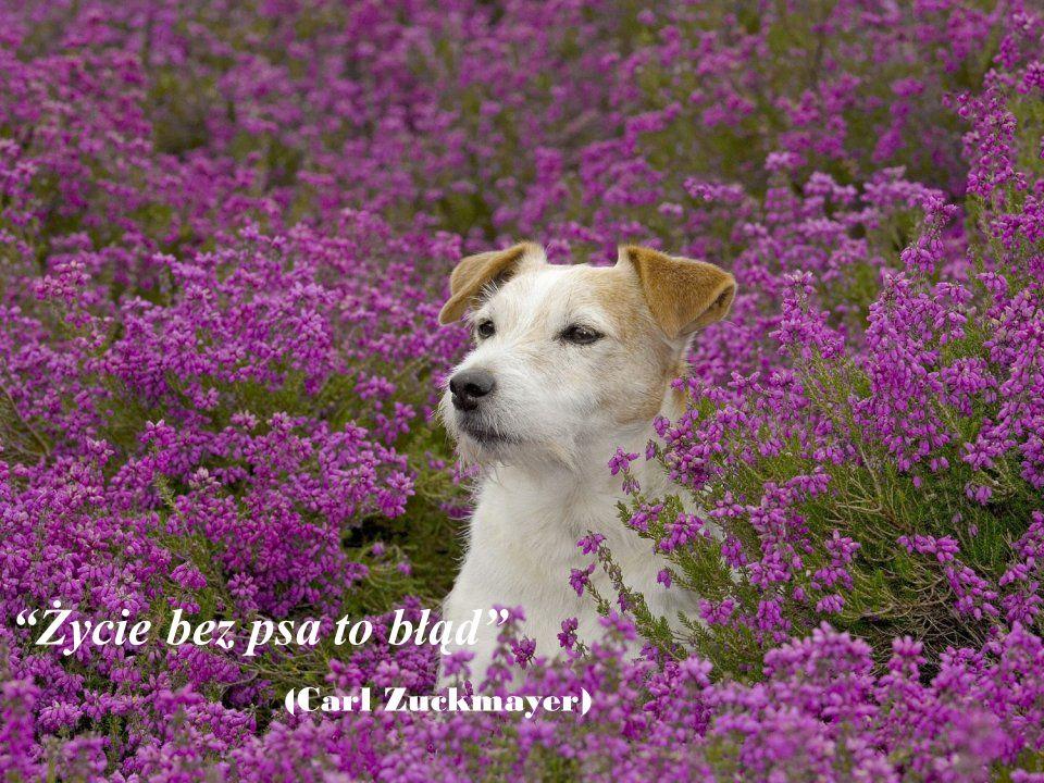 Jest wstyd dla nas ludzi, że pies jest najlepszym przyjacielem człowieka, i człowiek jest najgorszym przyjacielem psa.