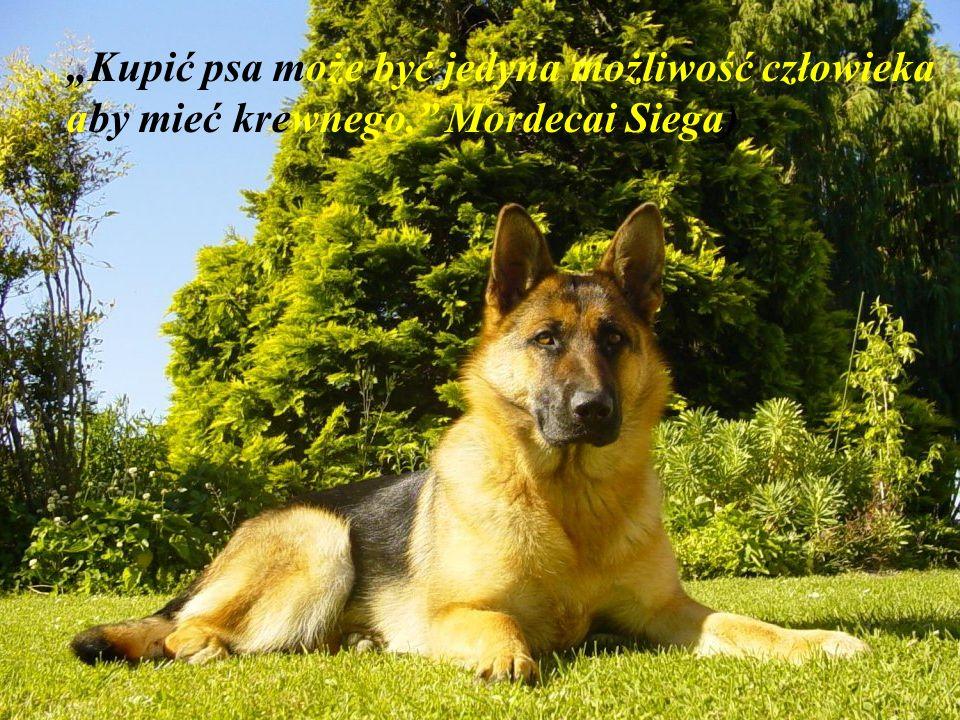 Jeżeli pies nie przyjdzie do ciebie potem jak popatrzy na twoją twarz, lepiej pójdź do domu i sprawdź swoje sumienie. (Woodrow Wilson)