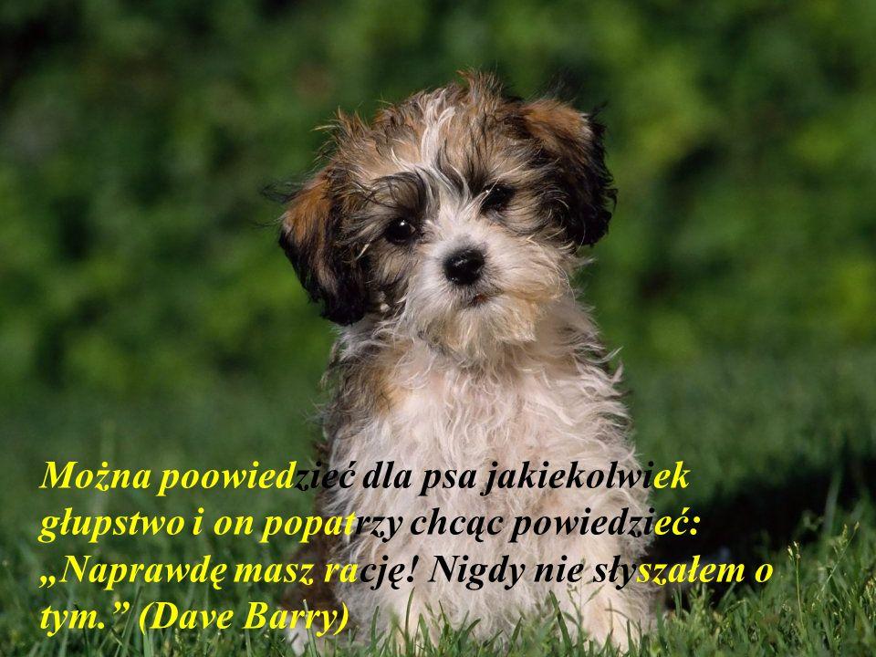 Kupić psa może być jedyna możliwość człowieka aby mieć krewnego. Mordecai Siega)