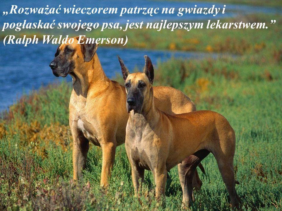 Można poowiedzieć dla psa jakiekolwiek głupstwo i on popatrzy chcąc powiedzieć: Naprawdę masz rację! Nigdy nie słyszałem o tym. (Dave Barry)