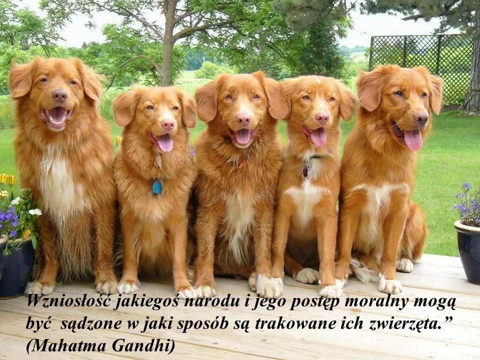 Gdziekolwiek jak pada deszcz, zawsze znajdzie się jakiś pies opuszczony, który nie pozwoli ci być szczęśliwym.! (Aldous Huxley)