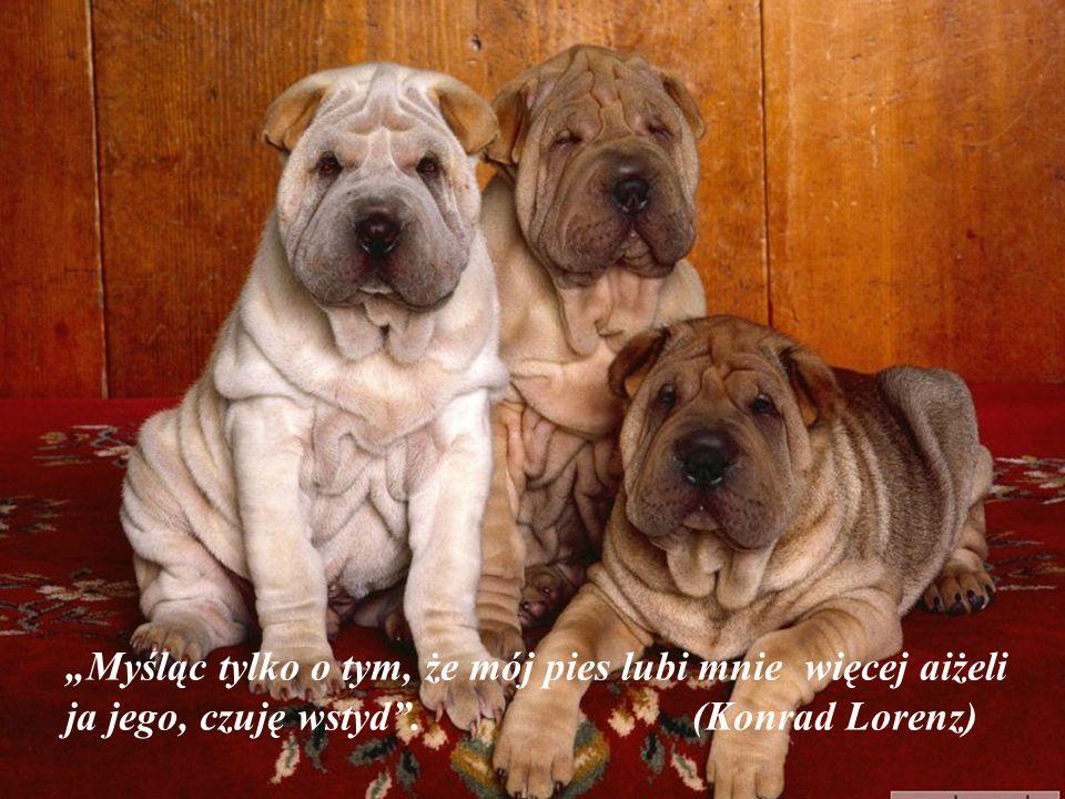 Psy nie są wszystkim w naszym życiu, ale czynią je kompletne. (Roger Caras)