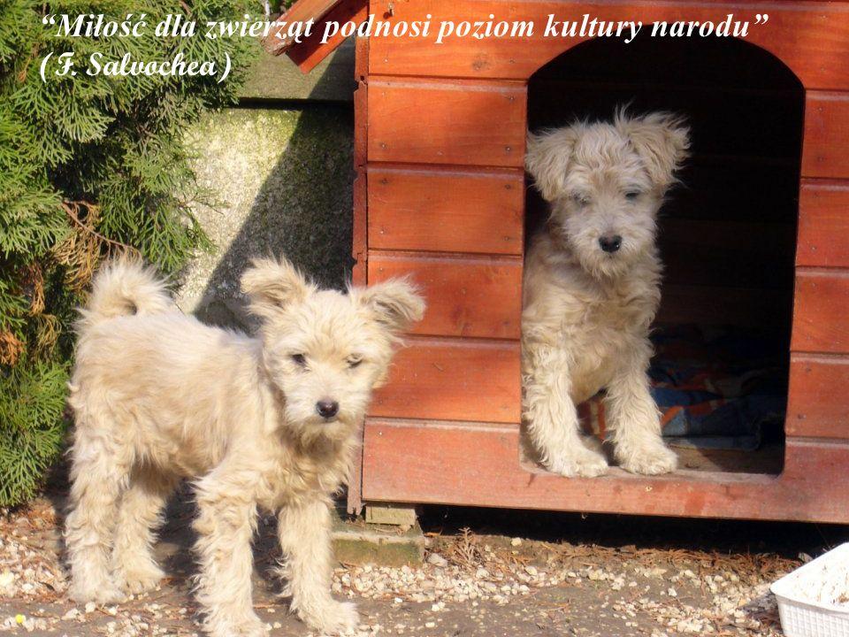 Miłość dla zwierząt podnosi poziom kultury narodu (F. Salvochea)