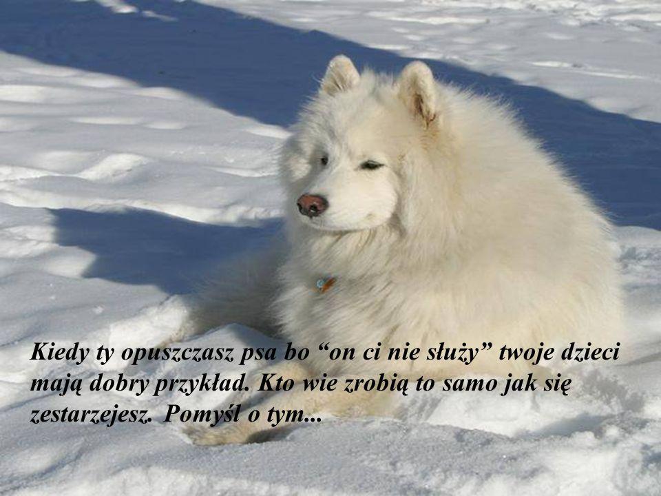 Nie ma lepszego psychiatry na świecie od psa, który liże twoją twarz. (Woodrow Wilson)