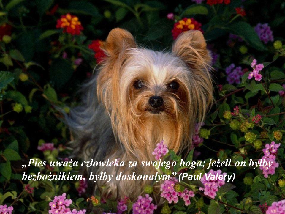 Pies uważa człowieka za swojego boga; jeżeli on byłby bezbożnikiem, byłby doskonałym (Paul Valery)