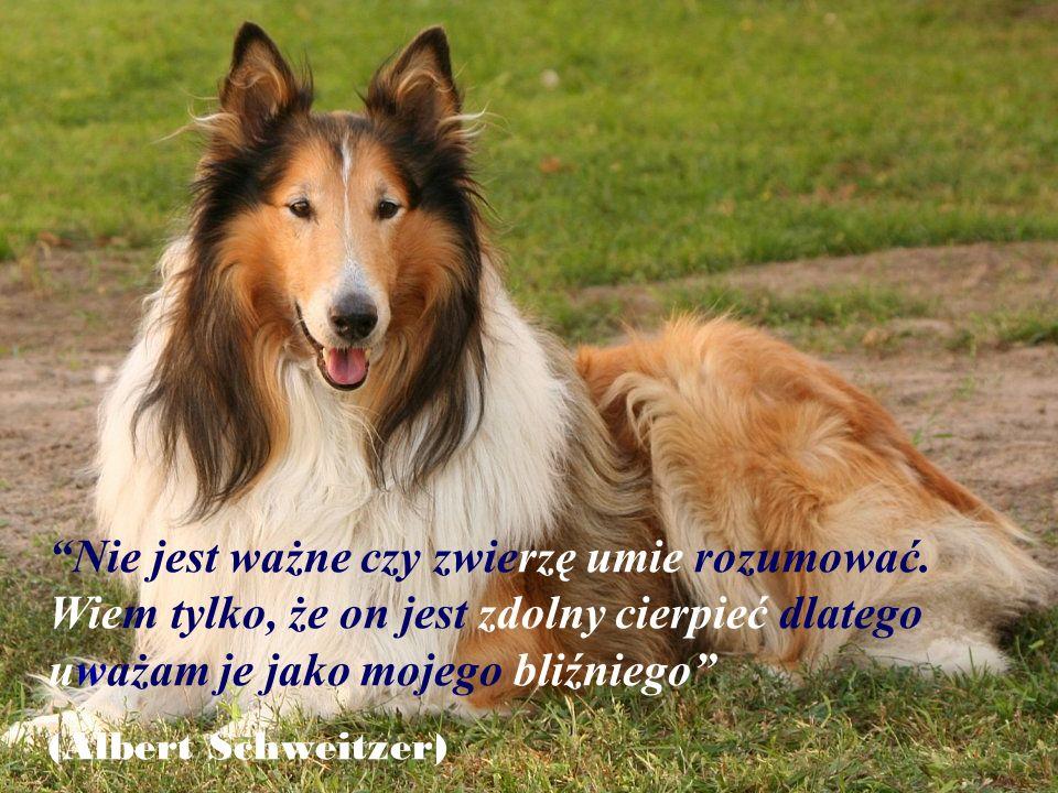 Można żyć bez psa, ale nie warto. (Heinz Rühmann)
