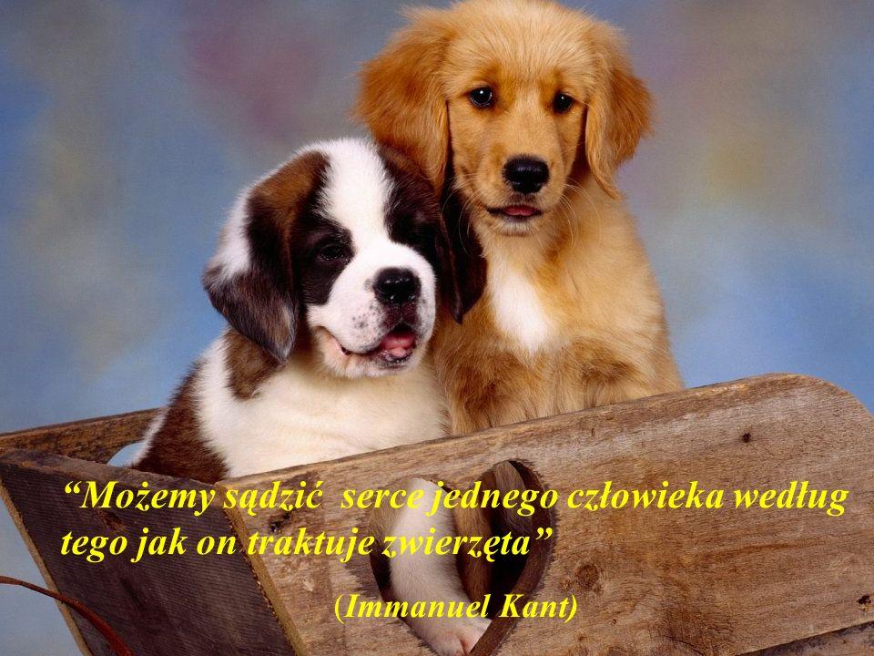 Możemy sądzić serce jednego człowieka według tego jak on traktuje zwierzęta (Immanuel Kant)