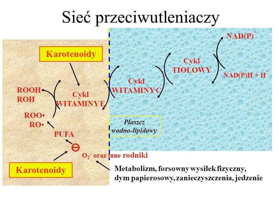 Cykl WITAMINY C Cykl WITAMINY E Cykl TIOLOWY NAD(P)H + H + NAD(P) + Płaszcz wodno-lipidowy ROOH ROH PUFA O 2 – oraz inne rodniki Metabolizm, forsowny