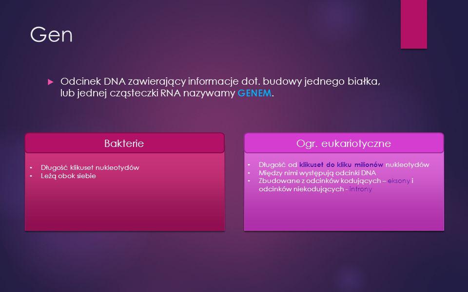 Gen Odcinek DNA zawierający informacje dot.