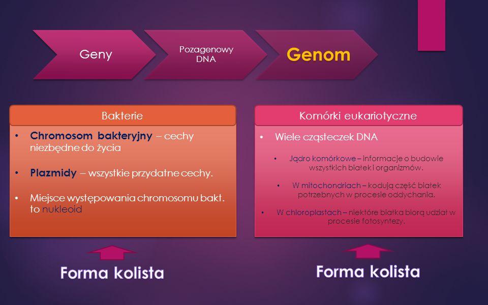 Geny Pozagenowy DNA Genom BakterieKomórki eukariotyczne Chromosom bakteryjny – cechy niezbędne do życia Plazmidy – wszystkie przydatne cechy.