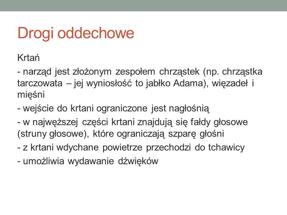 Drogi oddechowe Krtań - narząd jest złożonym zespołem chrząstek (np.