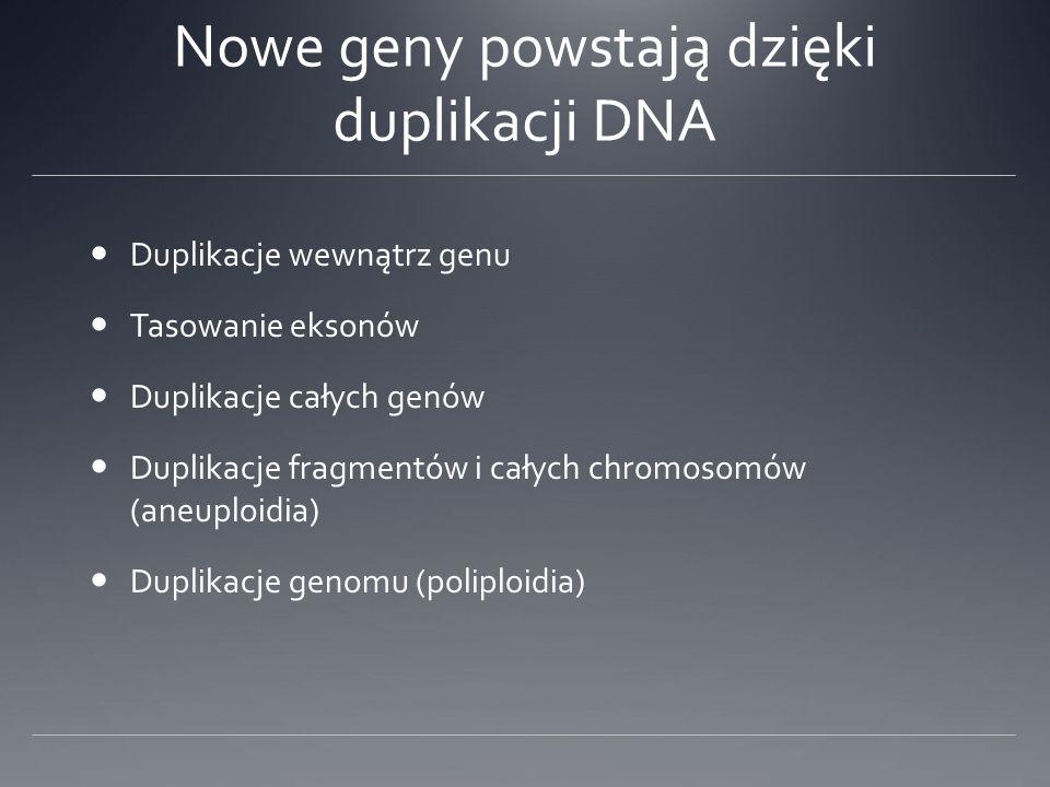 Nowe geny powstają dzięki duplikacji DNA Duplikacje wewnątrz genu Tasowanie eksonów Duplikacje całych genów Duplikacje fragmentów i całych chromosomów (aneuploidia) Duplikacje genomu (poliploidia)