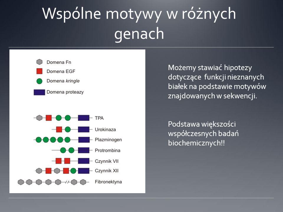 Wspólne motywy w różnych genach Możemy stawiać hipotezy dotyczące funkcji nieznanych białek na podstawie motywów znajdowanych w sekwencji.