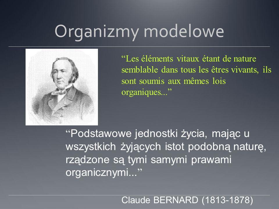 Organizmy modelowe Les éléments vitaux étant de nature semblable dans tous les êtres vivants, ils sont soumis aux mêmes lois organiques... Podstawowe