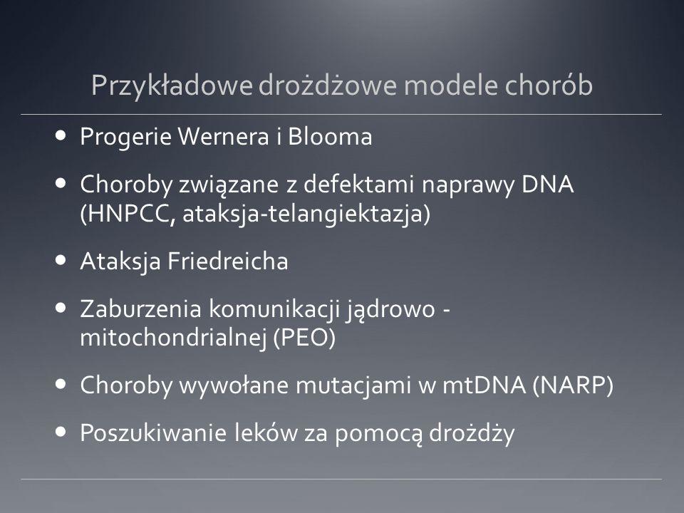 Przykładowe drożdżowe modele chorób Progerie Wernera i Blooma Choroby związane z defektami naprawy DNA (HNPCC, ataksja-telangiektazja) Ataksja Friedreicha Zaburzenia komunikacji jądrowo - mitochondrialnej (PEO) Choroby wywołane mutacjami w mtDNA (NARP) Poszukiwanie leków za pomocą drożdży