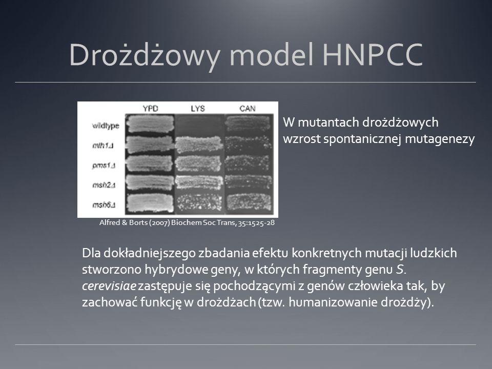 Drożdżowy model HNPCC W mutantach drożdżowych wzrost spontanicznej mutagenezy Alfred & Borts (2007) Biochem Soc Trans, 35:1525-28 Dla dokładniejszego