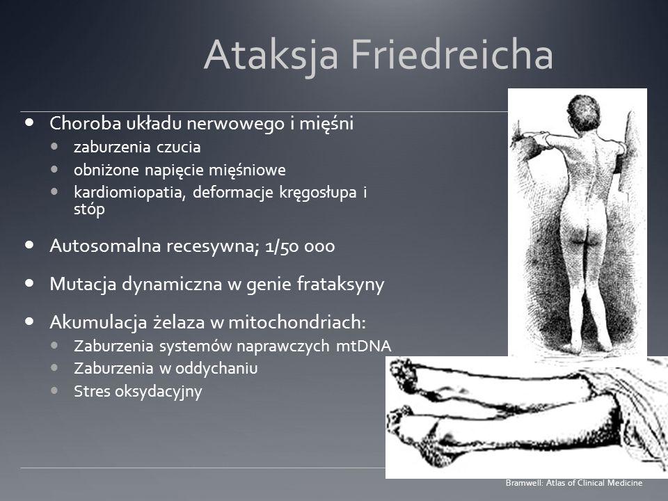 Ataksja Friedreicha Choroba układu nerwowego i mięśni zaburzenia czucia obniżone napięcie mięśniowe kardiomiopatia, deformacje kręgosłupa i stóp Autos