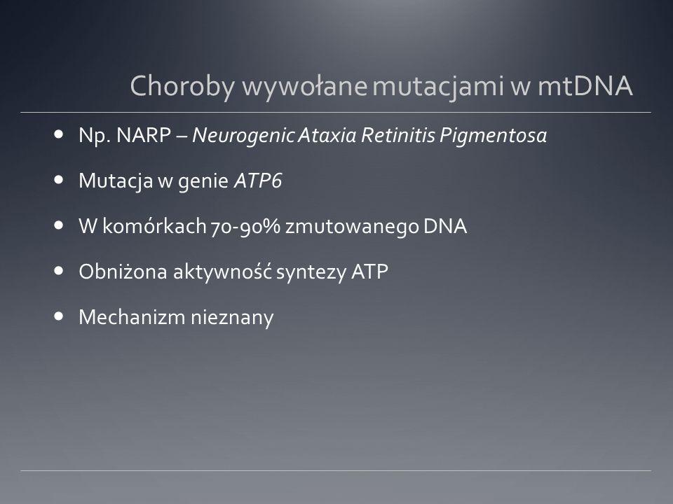 Choroby wywołane mutacjami w mtDNA Np.