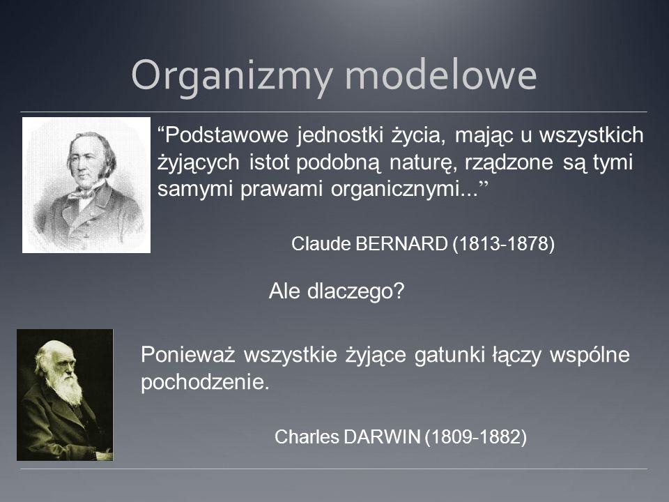 Organizmy modelowe Podstawowe jednostki życia, mając u wszystkich żyjących istot podobną naturę, rządzone są tymi samymi prawami organicznymi... Claud