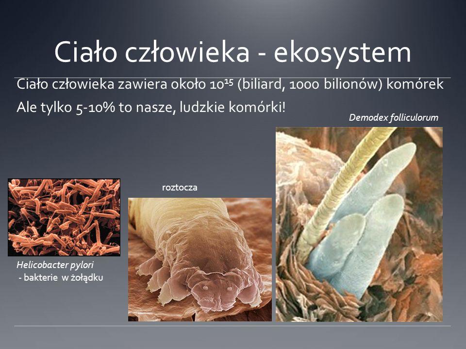 Ciało człowieka - ekosystem Ciało człowieka zawiera około 10 15 (biliard, 1000 bilionów) komórek Helicobacter pylori - bakterie w żołądku Demodex folliculorum roztocza Ale tylko 5-10% to nasze, ludzkie komórki!