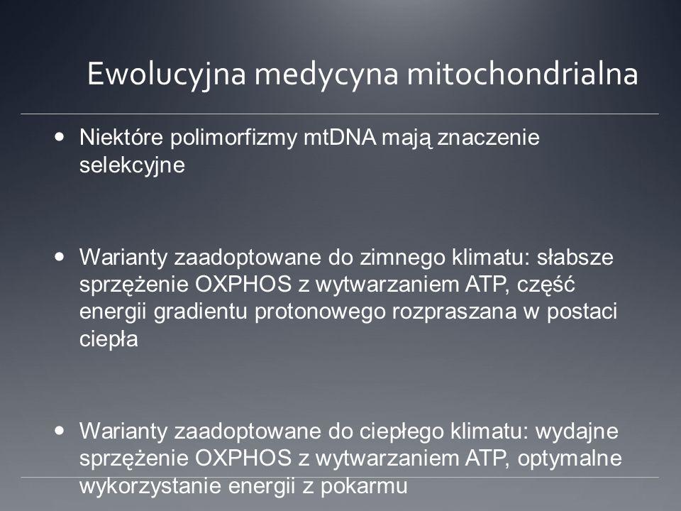 Ewolucyjna medycyna mitochondrialna Niektóre polimorfizmy mtDNA mają znaczenie selekcyjne Warianty zaadoptowane do zimnego klimatu: słabsze sprzężenie OXPHOS z wytwarzaniem ATP, część energii gradientu protonowego rozpraszana w postaci ciepła Warianty zaadoptowane do ciepłego klimatu: wydajne sprzężenie OXPHOS z wytwarzaniem ATP, optymalne wykorzystanie energii z pokarmu