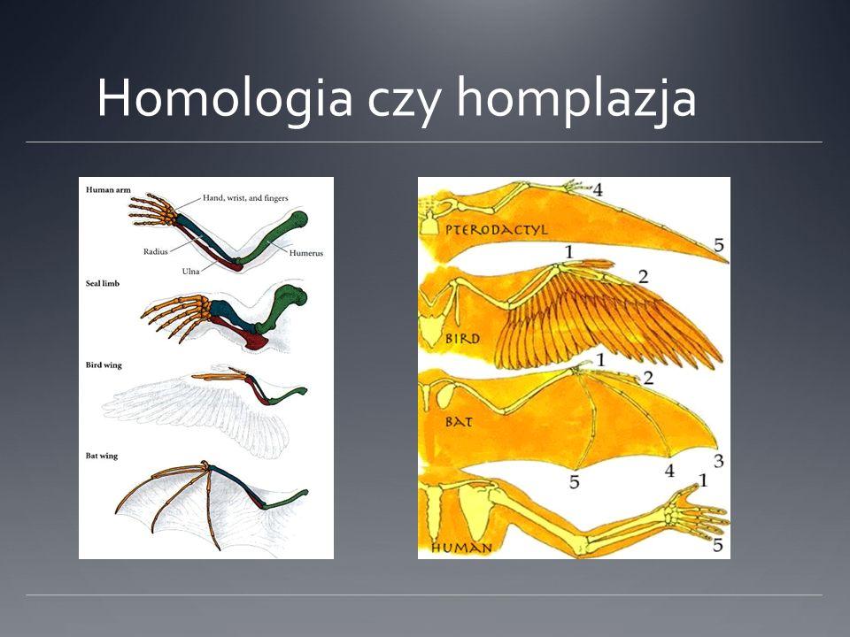 Podobieństwo i homologia sekwencji Przy dostatecznie dużym podobieństwie można założyć, że sekwencje są homologiczne Podobne struktury przestrzenne i/lub funkcje mogą być determinowane przez różne sekwencje Liczba możliwych sekwencji aminokwasowych o nietrywialnej długości jest gigantyczna Na poziomie sekwencji praktycznie nie stwierdza się konwergencji, homoplazje są przypadkowe