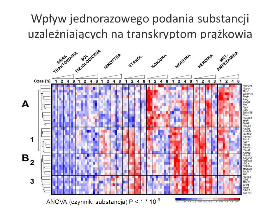 Wpływ jednorazowego podania substancji uzależniających na transkryptom prążkowia ANOVA (czynnik: substancja) P < 1 * 10 -6 Zidentyfikowane transkrypty