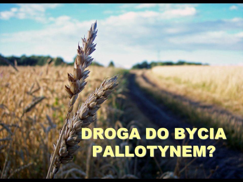 DROGA DO BYCIA PALLOTYNEM?
