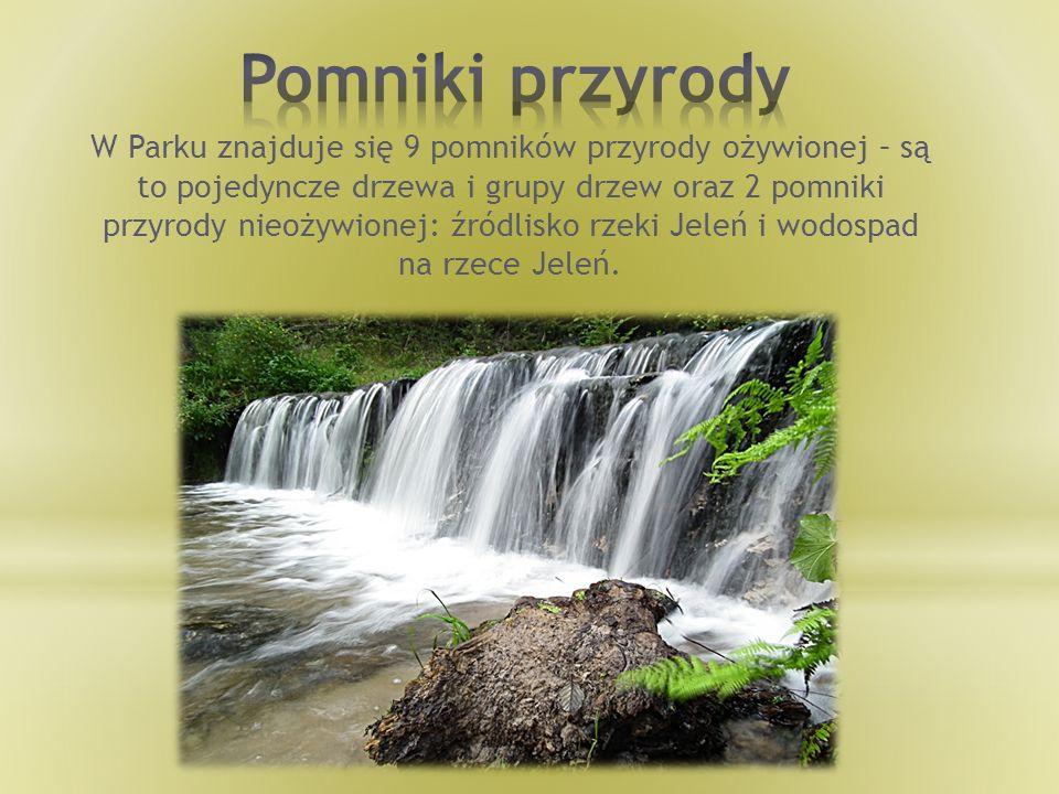 W Parku znajduje się 9 pomników przyrody ożywionej – są to pojedyncze drzewa i grupy drzew oraz 2 pomniki przyrody nieożywionej: źródlisko rzeki Jeleń