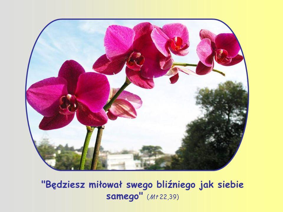 Prawdziwa miłość umie cierpieć z cierpiącymi, cieszyć się z cieszącymi, nosić ciężary drugiego, umie stawać się jedno, jak mówi św.