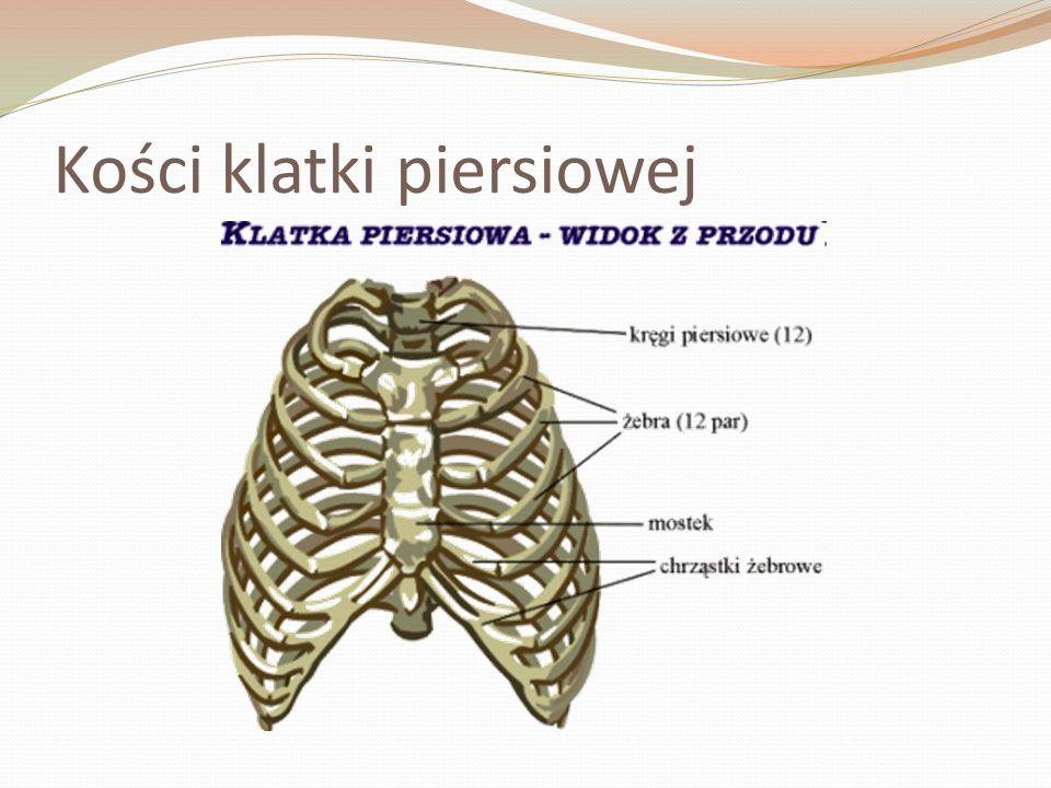 Kości klatki piersiowej