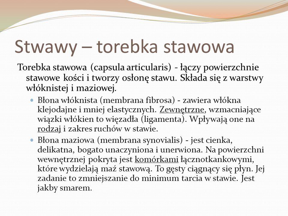 Stwawy – torebka stawowa Torebka stawowa (capsula articularis) - łączy powierzchnie stawowe kości i tworzy osłonę stawu. Składa się z warstwy włóknist