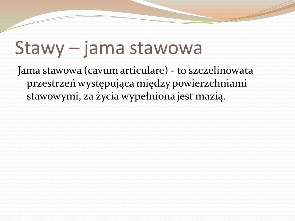 Stawy – jama stawowa Jama stawowa (cavum articulare) - to szczelinowata przestrzeń występująca między powierzchniami stawowymi, za życia wypełniona jest mazią.