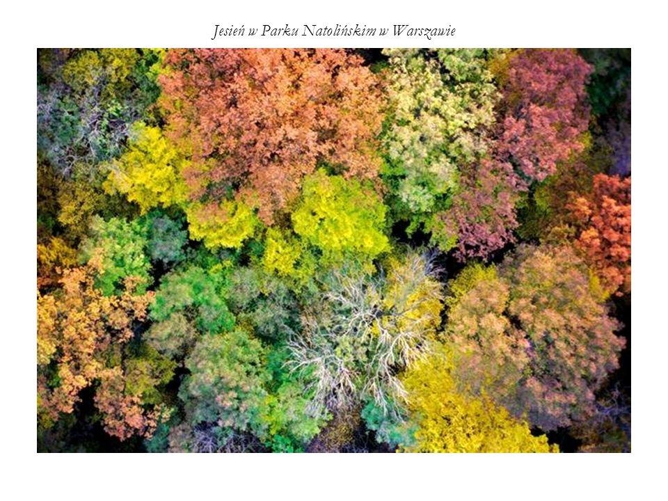 Jesień w Parku Natolińskim w Warszawie