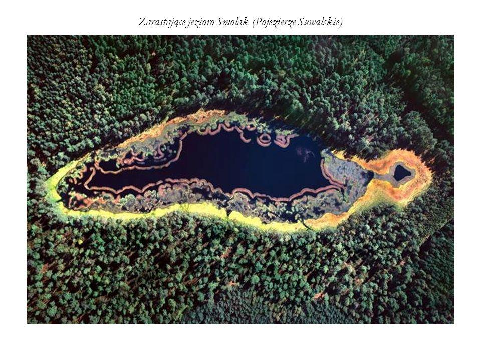 Zarastające jezioro Smolak (Pojezierze Suwalskie)