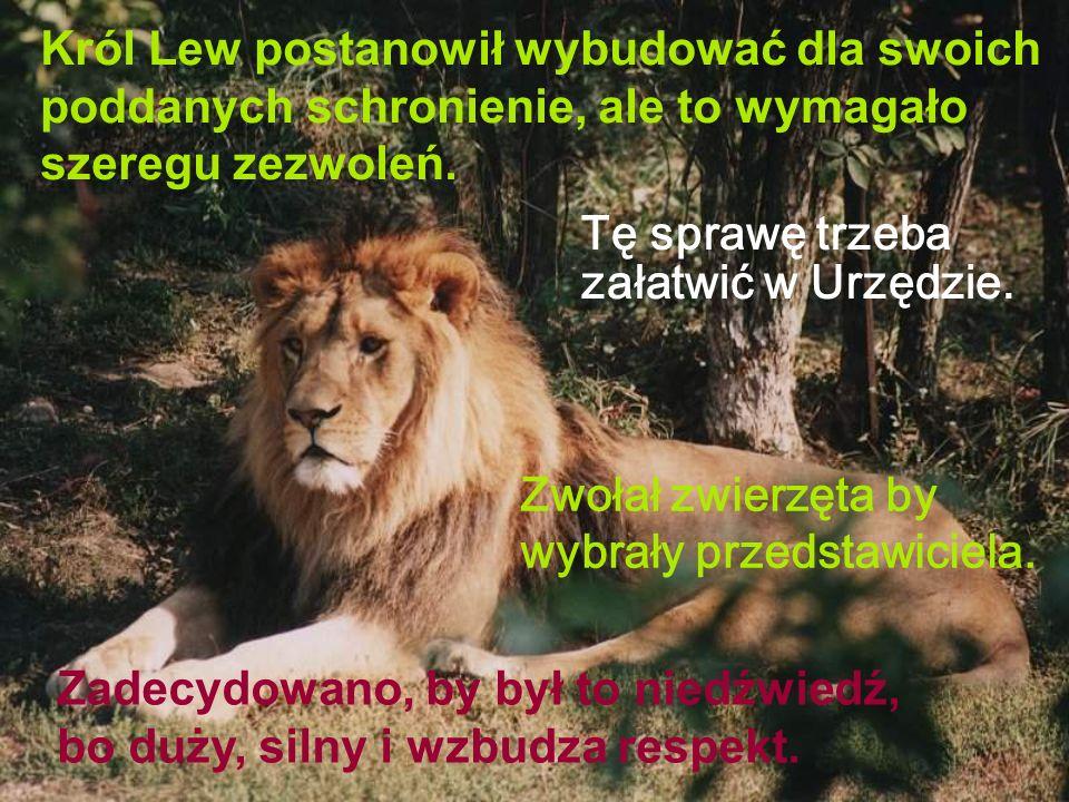 Król Lew postanowił wybudować dla swoich poddanych schronienie, ale to wymagało szeregu zezwoleń. Tę sprawę trzeba załatwić w Urzędzie. Zwołał zwierzę