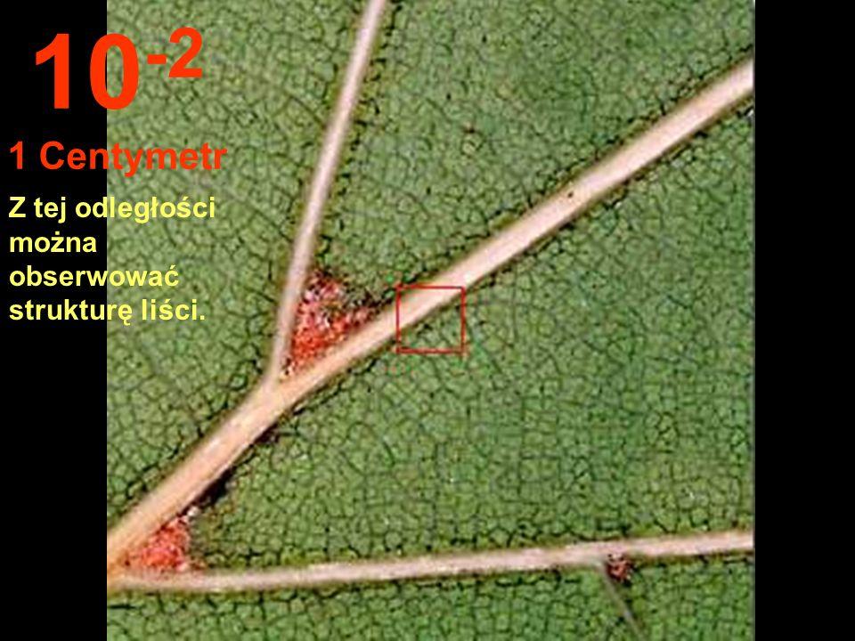 Zbliżamy się na 10 cm... Możemy dotykać liści. 10 -1 10 Centymetrów