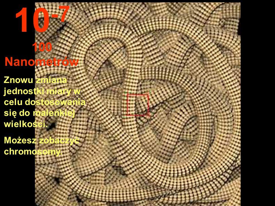 Widoczne jest jądro komórki ny. 10 -6 1 mikron