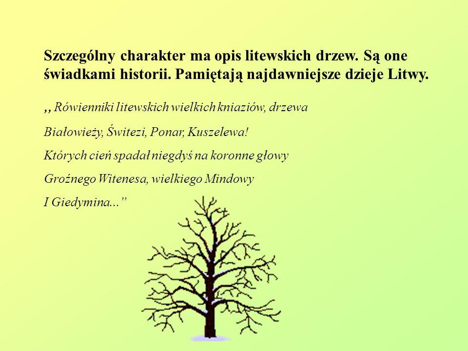 Szczególny charakter ma opis litewskich drzew. Są one świadkami historii. Pamiętają najdawniejsze dzieje Litwy. Rówienniki litewskich wielkich kniazió