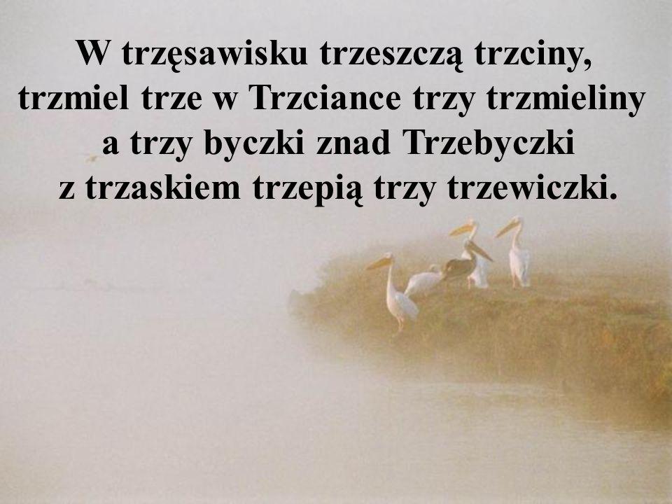 W trzęsawisku trzeszczą trzciny, trzmiel trze w Trzciance trzy trzmieliny a trzy byczki znad Trzebyczki z trzaskiem trzepią trzy trzewiczki.