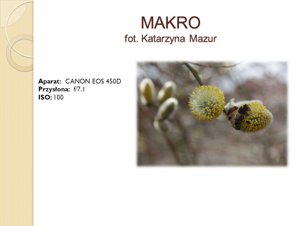 MAKRO fot. Katarzyna Mazur Aparat: CANON EOS 450D Przysłona: f/7.1 ISO: 100