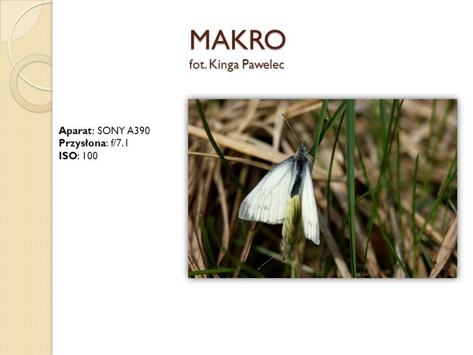 MAKRO fot. Kinga Pawelec Aparat: SONY A390 Przysłona: f/7.1 ISO: 100