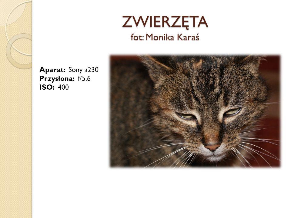 ZWIERZĘTA fot: Monika Karaś Aparat: Sony a230 Przysłona: f/5.6 ISO: 400