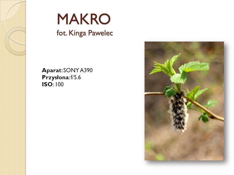 MAKRO fot. Kinga Pawelec Aparat: SONY A390 Przysłona: f/5.6 ISO: 100