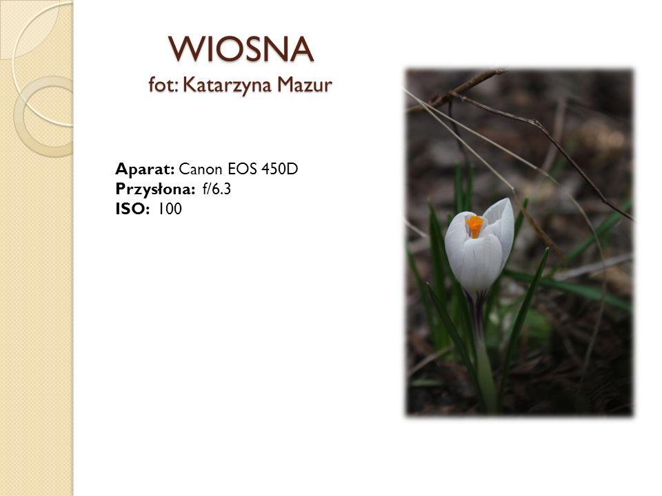 WIOSNA fot: Monika Karaś Aparat: Sony a230 Przysłona: f/13 ISO: 100