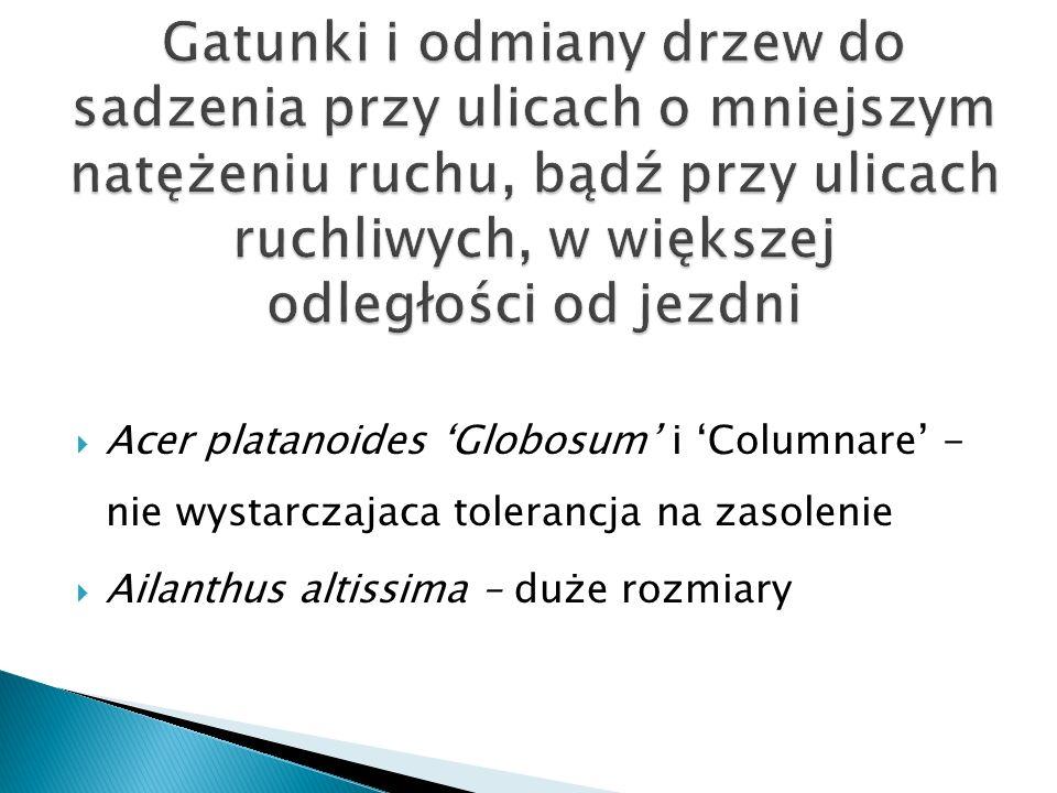 Acer platanoides Globosum i Columnare - nie wystarczajaca tolerancja na zasolenie Ailanthus altissima – duże rozmiary