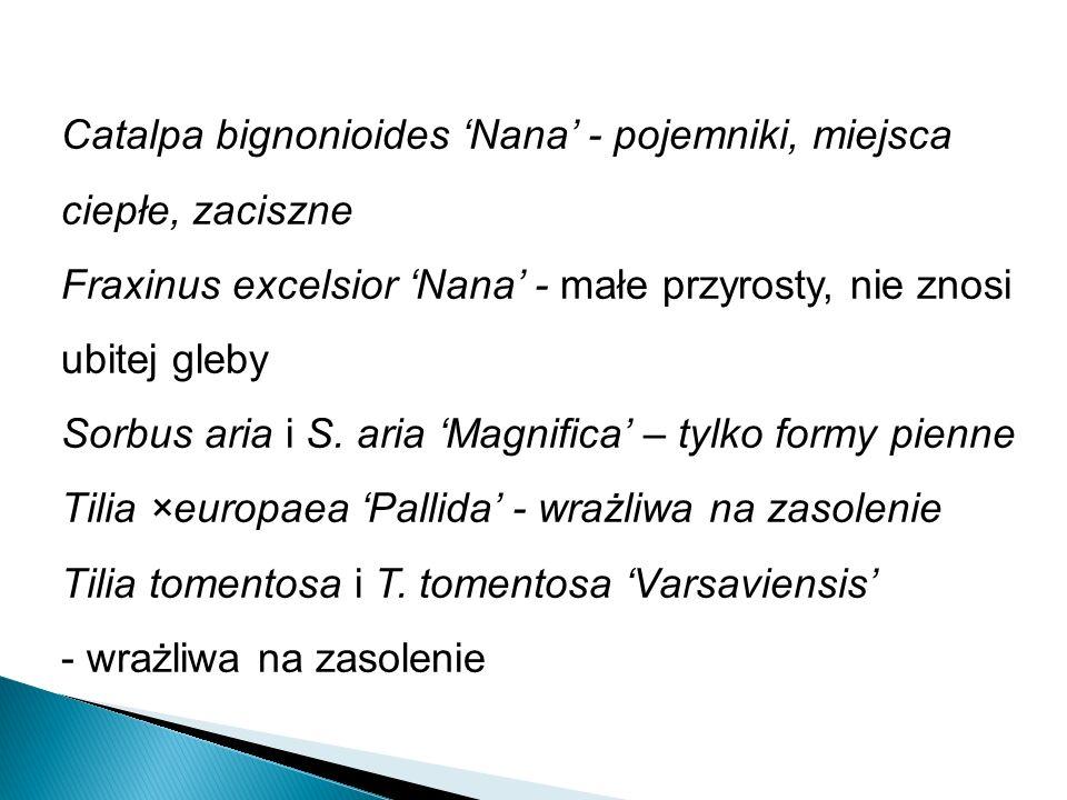 Catalpa bignonioides Nana - pojemniki, miejsca ciepłe, zaciszne Fraxinus excelsior Nana - małe przyrosty, nie znosi ubitej gleby Sorbus aria i S.