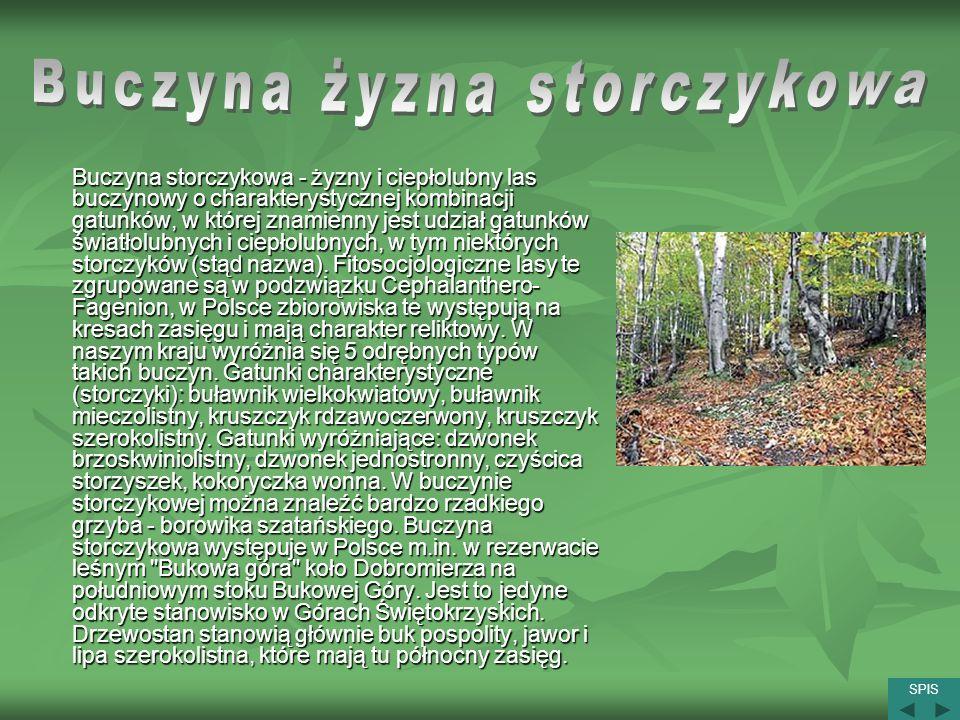 Buczyna storczykowa - żyzny i ciepłolubny las buczynowy o charakterystycznej kombinacji gatunków, w której znamienny jest udział gatunków światłolubny