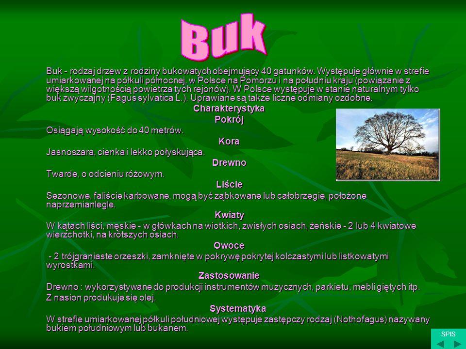 Buk - rodzaj drzew z rodziny bukowatych obejmujący 40 gatunków. Występuje głównie w strefie umiarkowanej na półkuli północnej, w Polsce na Pomorzu i n