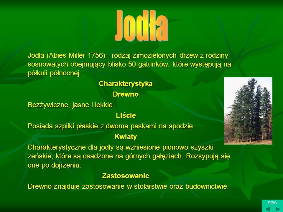 Jodła (Abies Miller 1756) - rodzaj zimozielonych drzew z rodziny sosnowatych obejmujący blisko 50 gatunków, które występują na półkuli północnej. Char